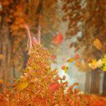 autumn-4603470_1920